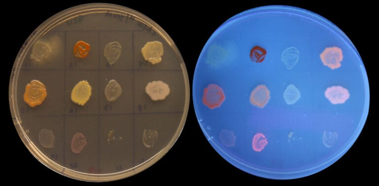 Bakterieplater_sort_notxt