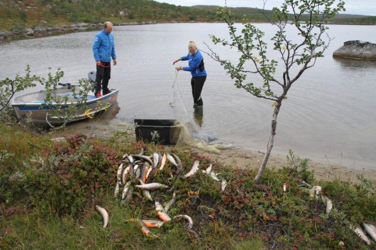 Freshwater fieldwork Jarfjordfjellet Sør-Varanger Photo Guttorm Christensen Akvaplan-niva