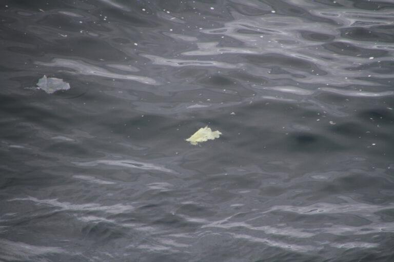 PlasticFish2