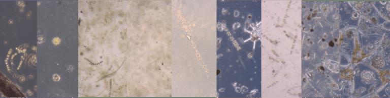 seasonal algae long