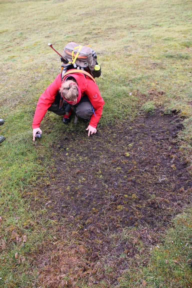 Grubbing recruitment Sassendalen crater IMG_7460 Cornelia Jaspers